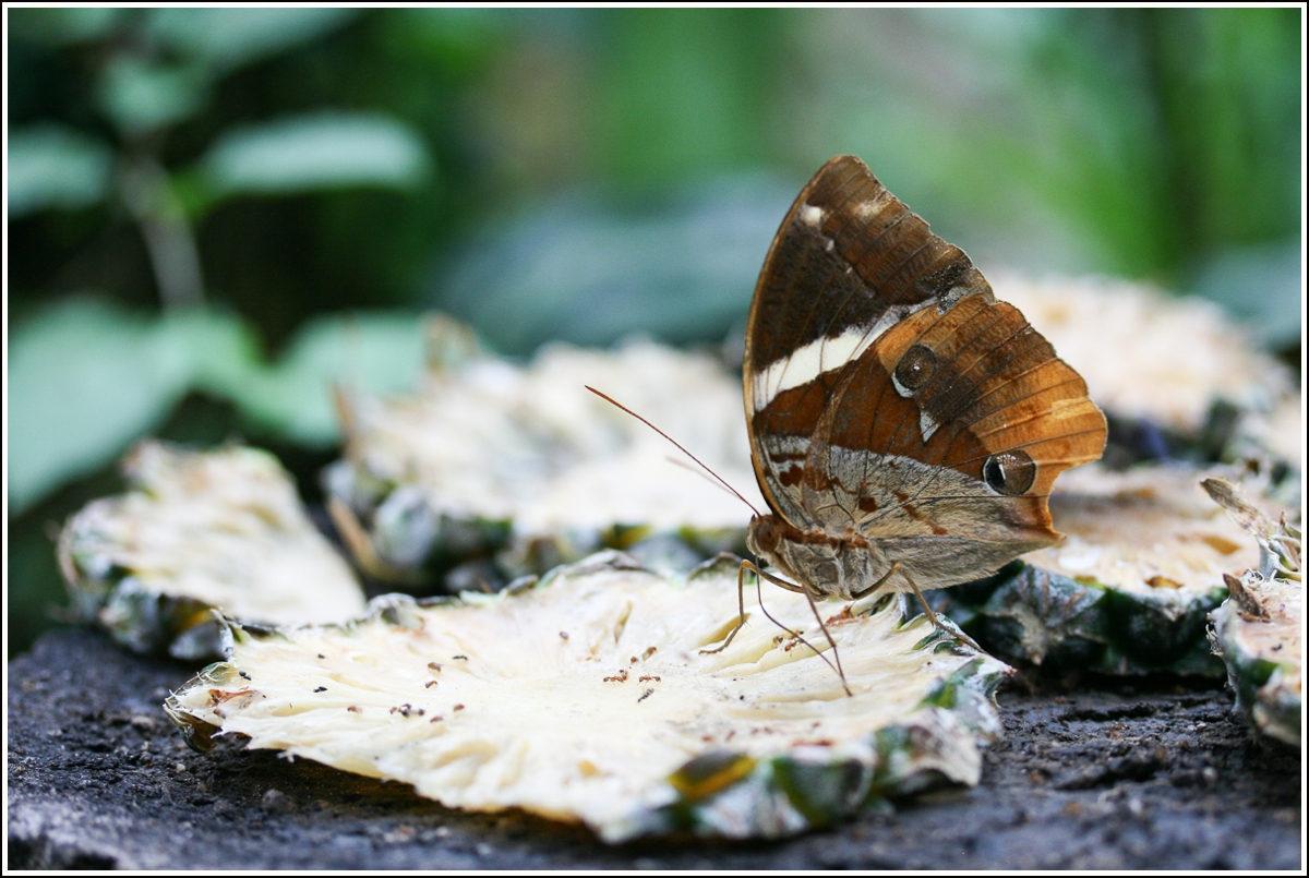 penang-butterfly-farm2