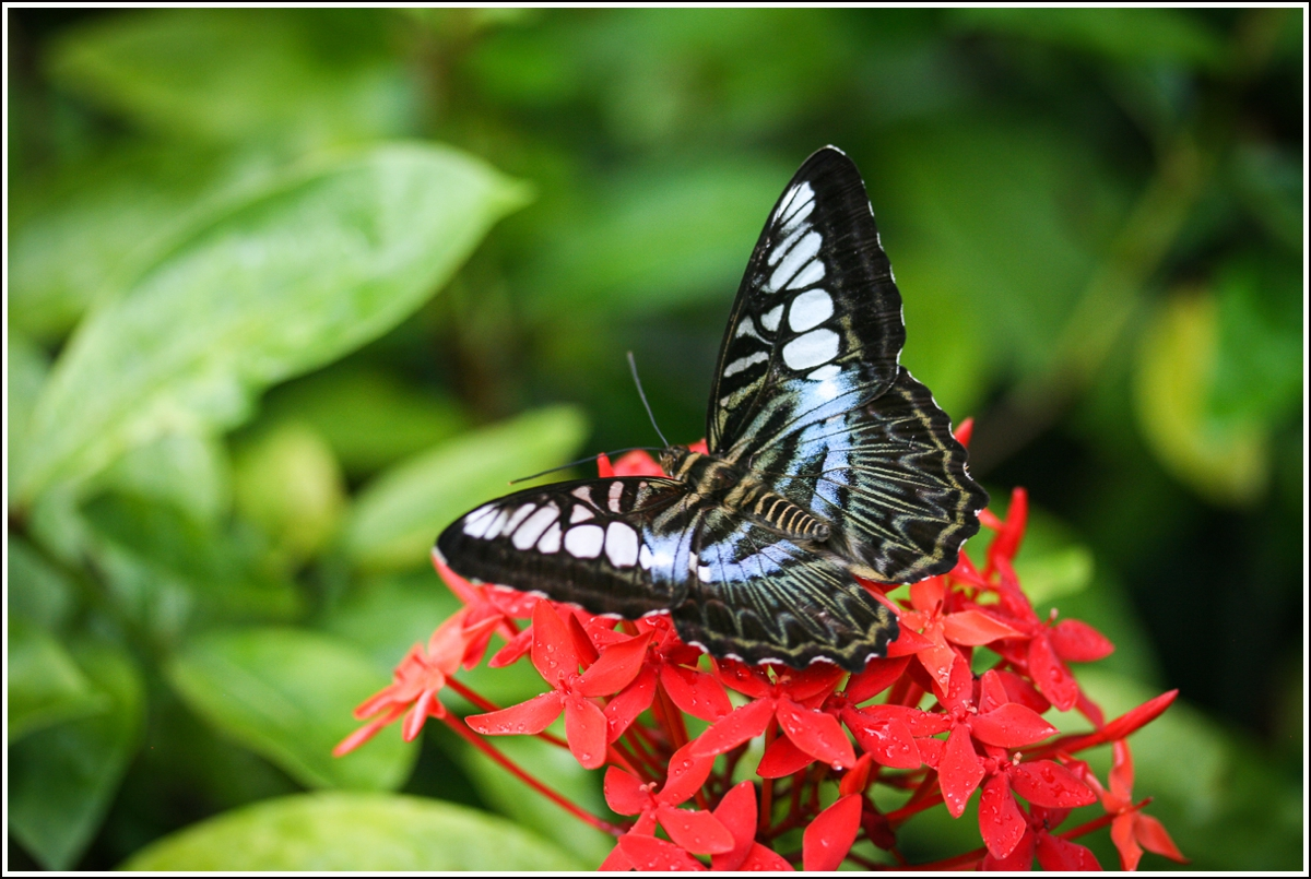 penang-butterfly-farm3