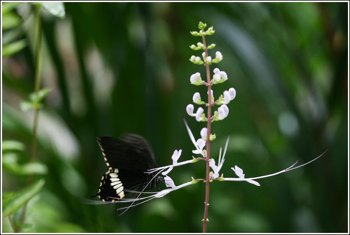 penang-butterfly-farm5