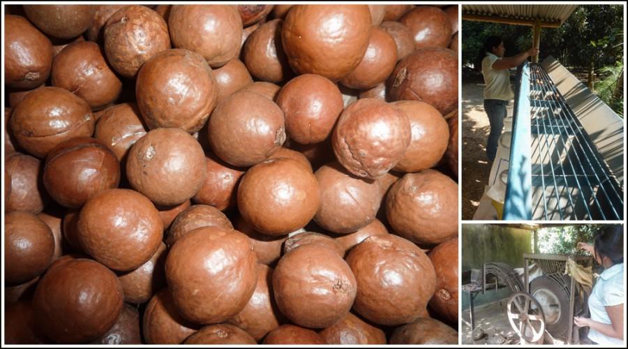 2015-03-13_0008guatemala-macadamia-farm3