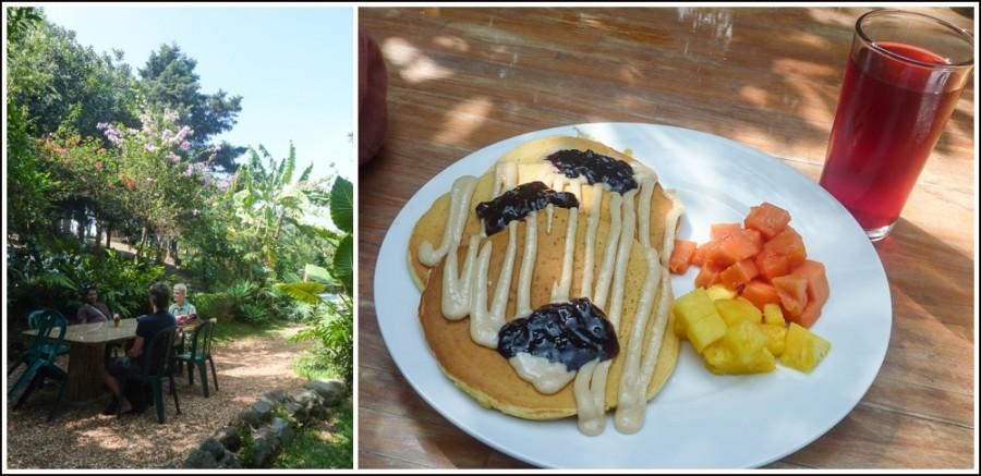 guatemala-macadamia-farm