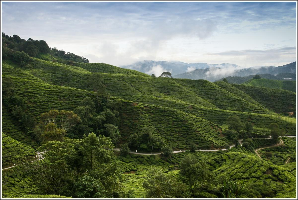 Cameron-Highlands-Malaysia-landscape