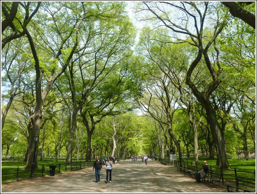 New-york-central-park9