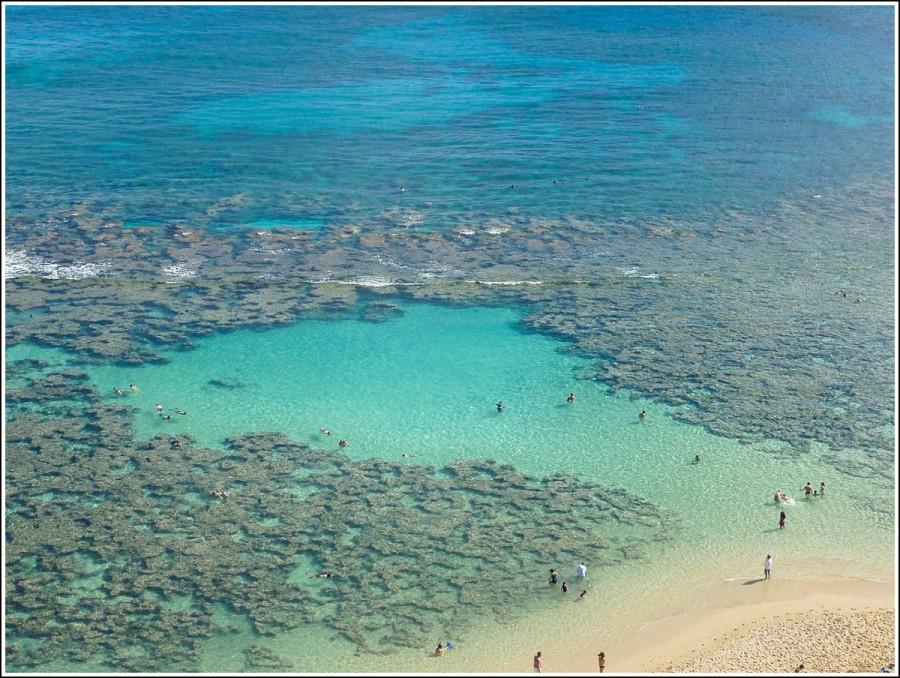 Hawaii-snorkling