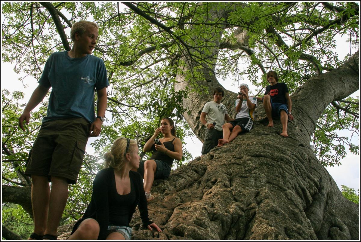 baobab-tre-sør-afrika2