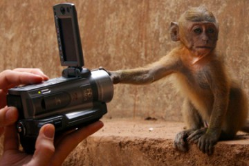 monkey wanting to make a movie