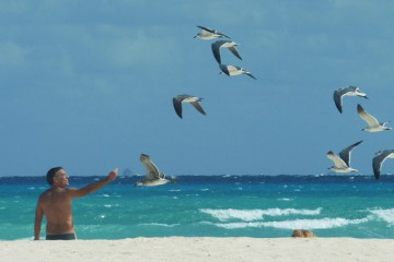 windy beach and seagulls in playa del carmen mexico