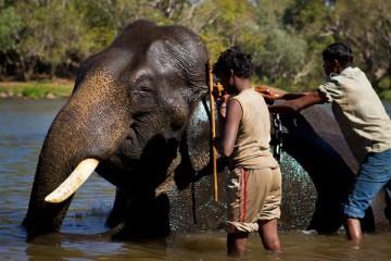 dubare-elephant-camp-2
