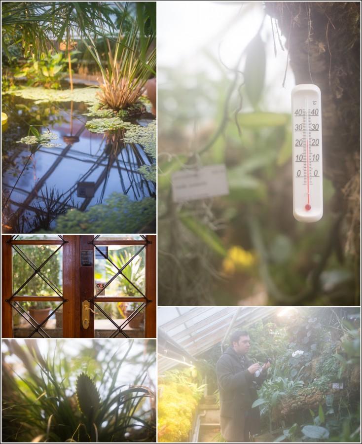 botanisk-hage-eksotisk-planter