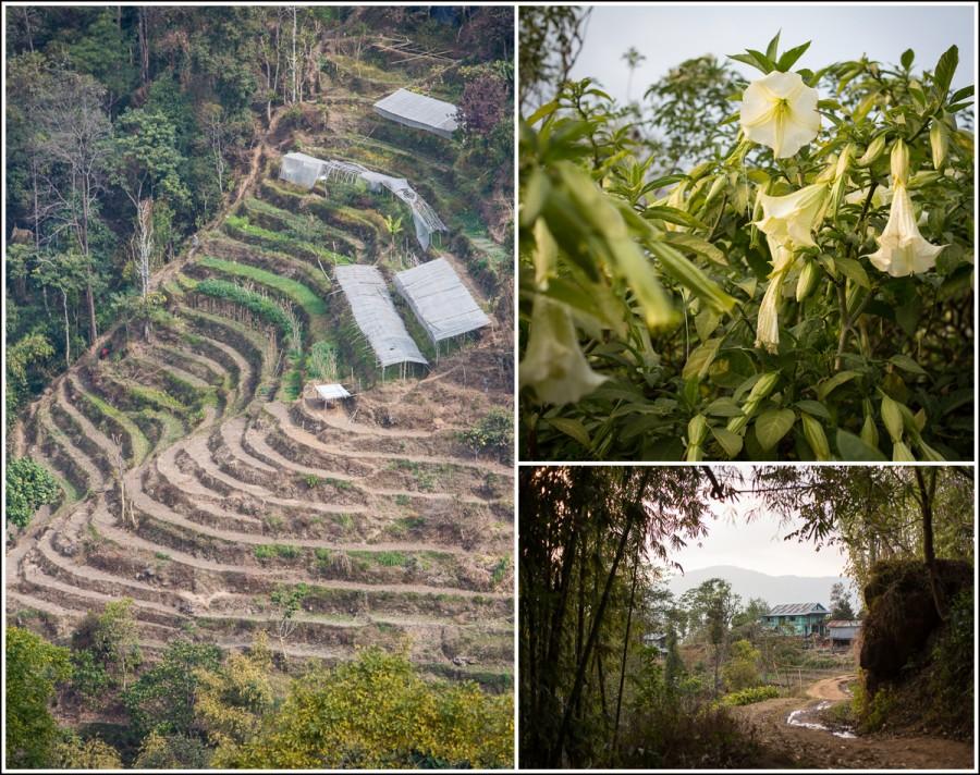Ilam-Nepal-farming