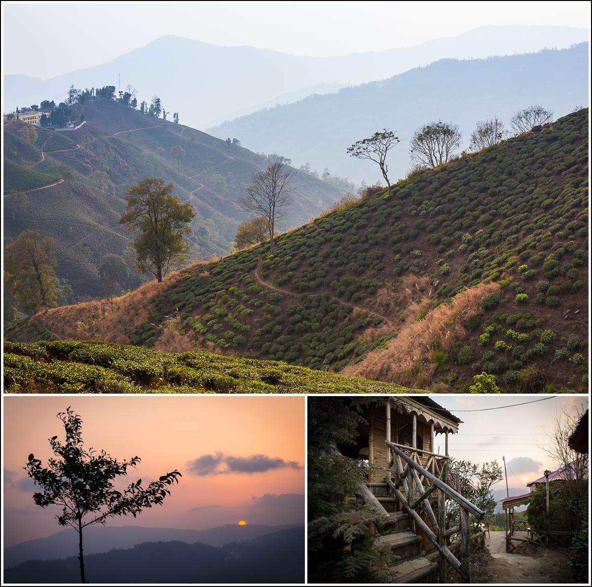 ilam-nepal-sunset-tea