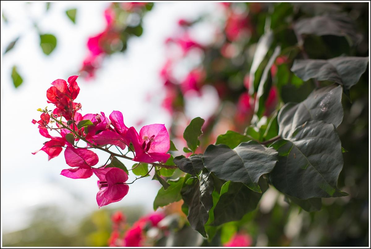 dar-moha-flower-garden