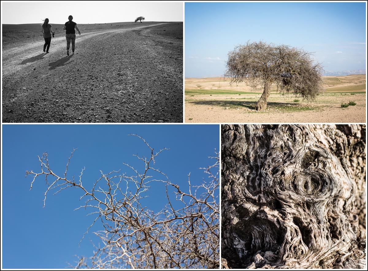 Agafay-desert-marocco