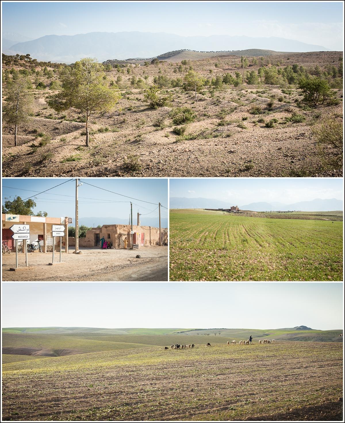 Agafay-desert-marocco-sheep