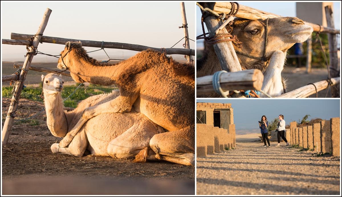 Terre-des-etoiles-desert-animals