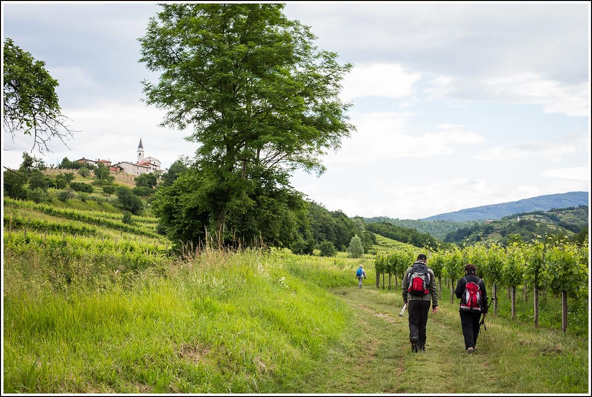 Brda-Slovenia-landscape