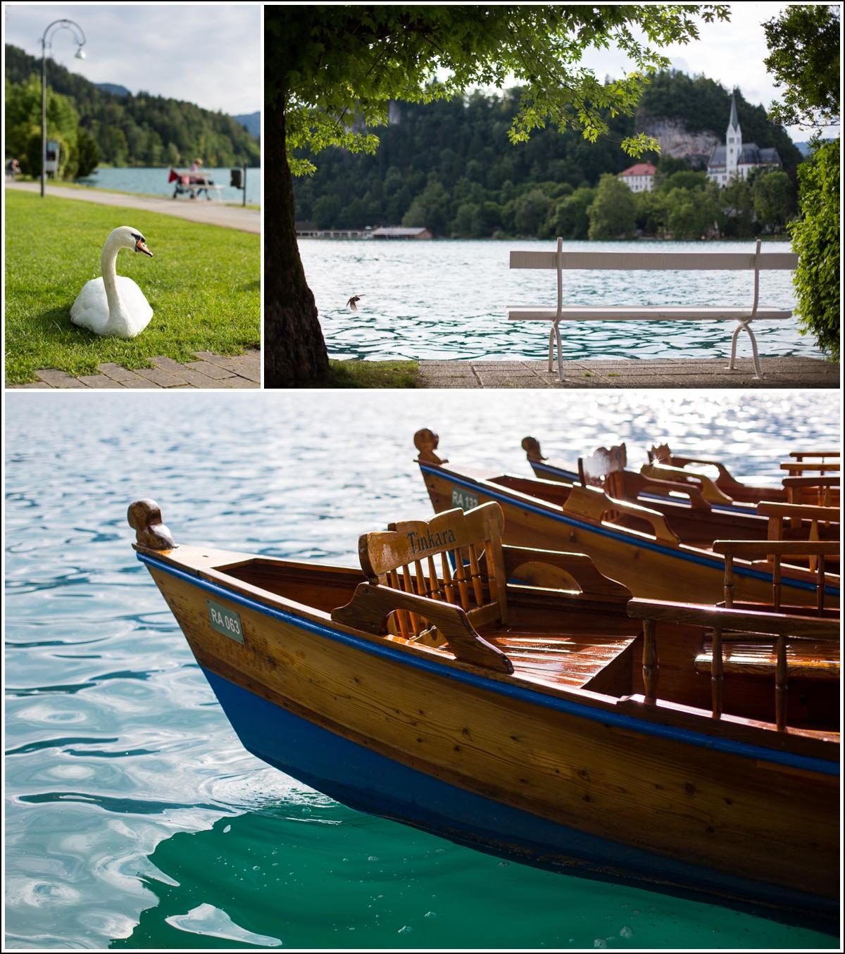 bled-lake-swan-slovenia