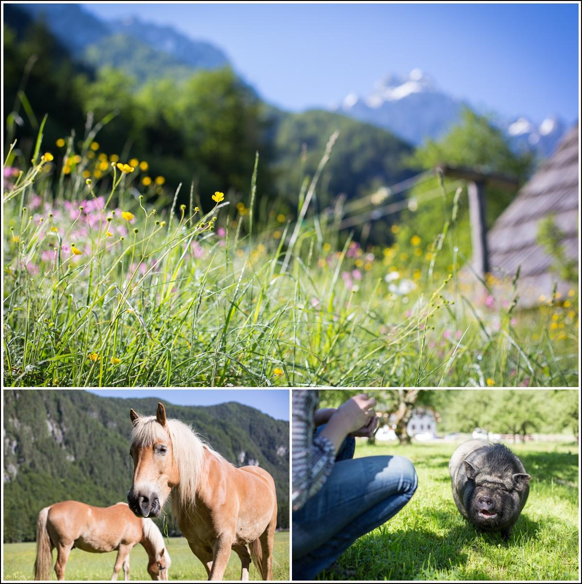 Logar-Valley-Lenar-animals