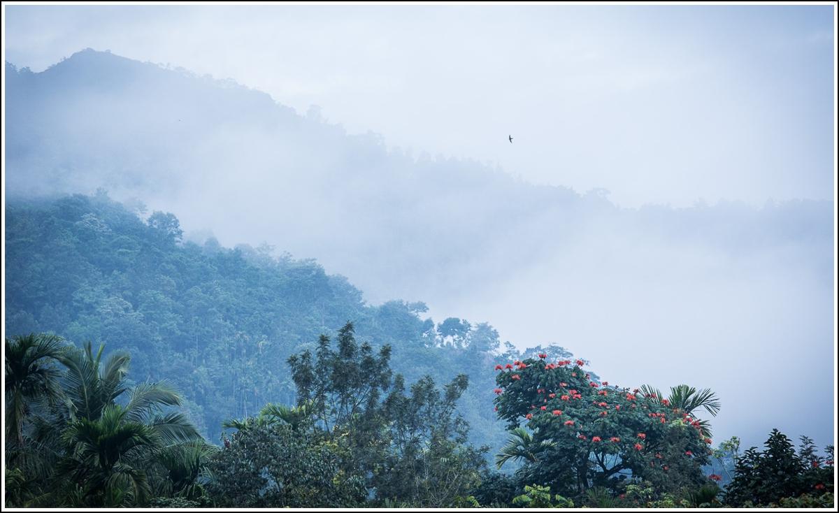 bamboo-village-morning-india