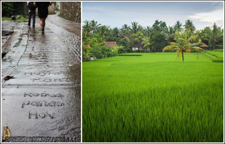 Ubud-rice-paddies4