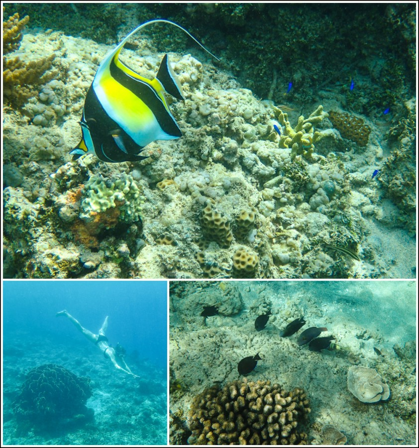 Gili-Air-Indonesia-snorkeling-fish