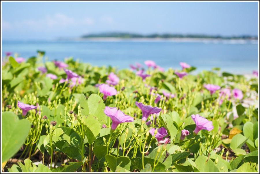 Gili-Air-Indonesia-flowers