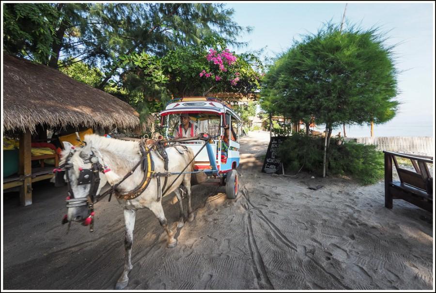 Gili-Air-Indonesia-horse
