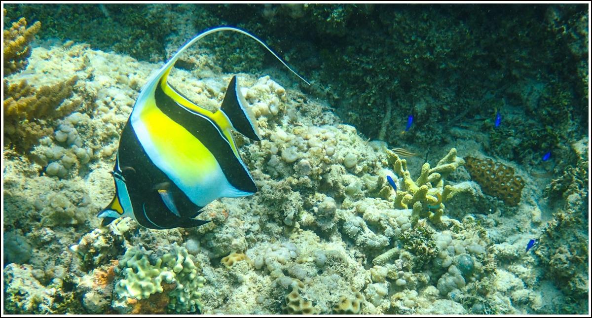 hvilket-undervannskamera?