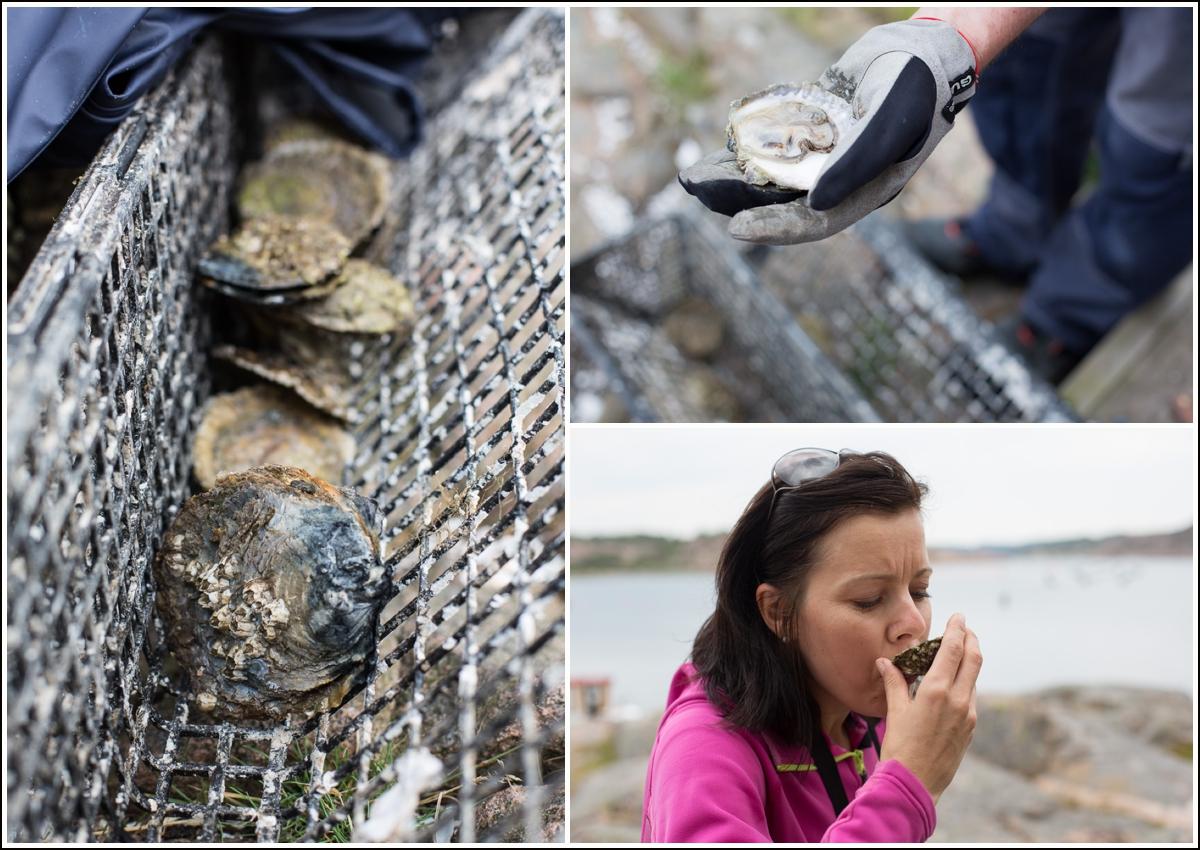 Lysekil-smake-på-østers