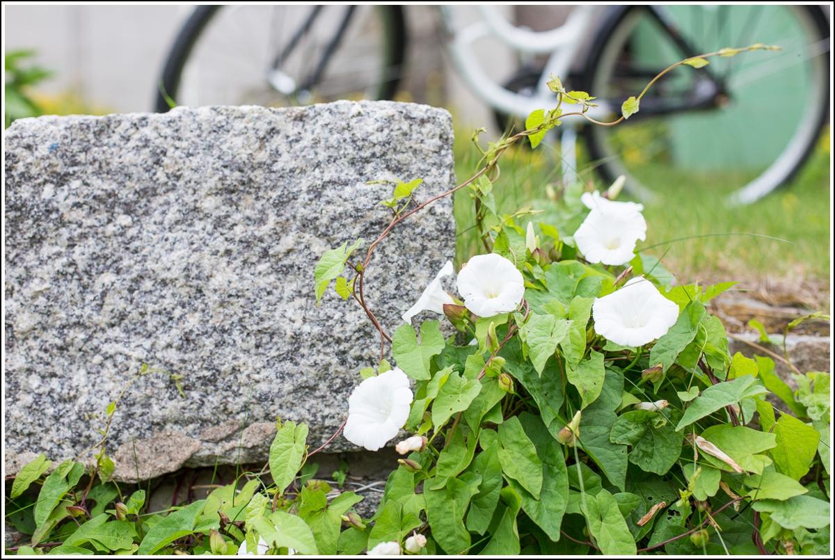 Fiskebäckskil-blomster