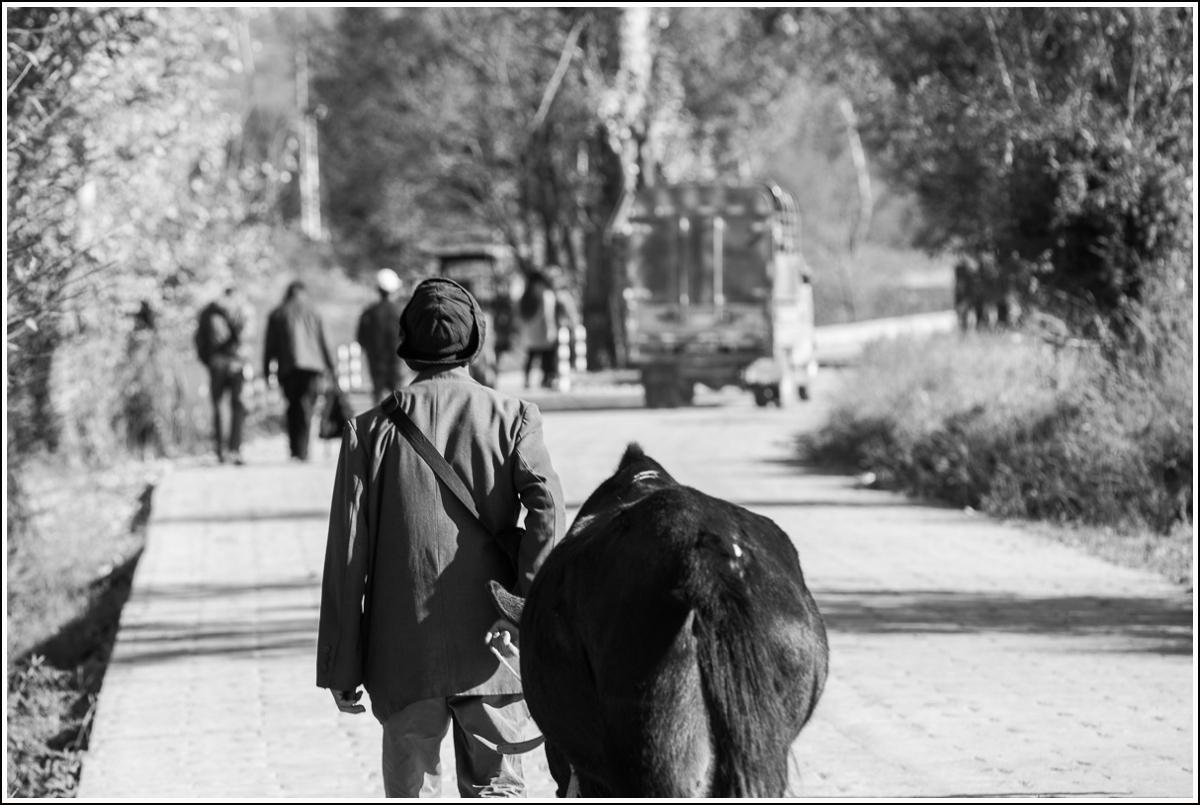 mann på vei til husdyrmarked i shaxi, kina