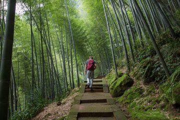 Reisetips til Kinas største bambusskog