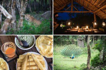 Leopardsafari-glamping-Wilpattu-nasjonalpark-sri-lankas-eldste
